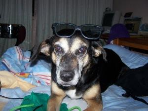 Negra, una de mis perras