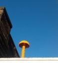 En East End es común ver hongos de colores en los techos